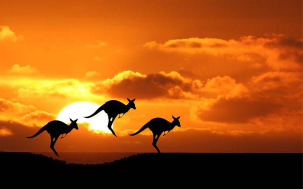 kangaroos-baixa