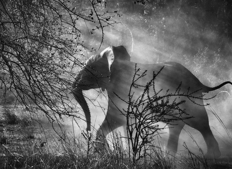 Elefantes-(créd.-Sebastião-Salgado)