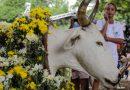 Festa do Boi Falô movimenta Barão Geraldo na Sexta-feira Santa